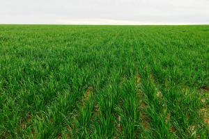 Crop Land For Sale - Cheyenne County