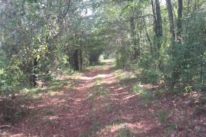 Smith Creek Farm and Hunting Opportunity