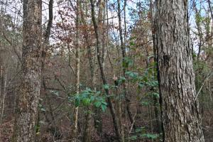 Greenville Hunting and Timber Investment Tract - Butler County AL