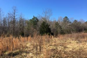 Beautiful Level Land with Creek in Spartanburg, SC (37 of 79)