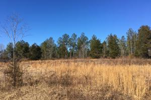 Beautiful Level Land with Creek in Spartanburg, SC (78 of 79)