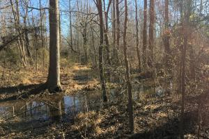 Beautiful Level Land with Creek in Spartanburg, SC (46 of 79)