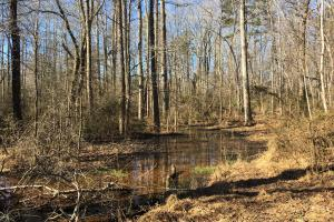 Beautiful Level Land with Creek in Spartanburg, SC (42 of 79)