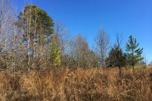 Beautiful Level Land with Creek in Spartanburg, SC (52 of 79)