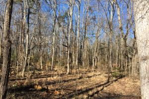 Beautiful Level Land with Creek in Spartanburg, SC (44 of 79)