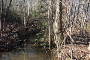 Beautiful Level Land with Creek in Spartanburg, SC (40 of 79)