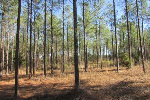 Webster County Hunting / Timber Tract - Webster County GA
