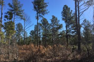 Calvery Road Level Homesite  - Spartanburg County SC