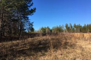 Country Homesite with Creek in Spartanburg, SC (8 of 24)