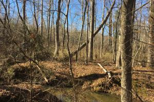 Country Homesite with Creek in Spartanburg, SC (13 of 24)