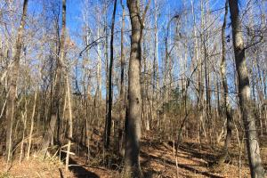 Country Homesite with Creek in Spartanburg, SC (18 of 24)