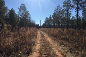 Country Homesite with Creek in Spartanburg, SC (6 of 24)