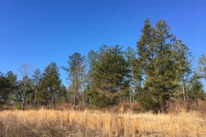 Country Homesite with Creek - Spartanburg County SC
