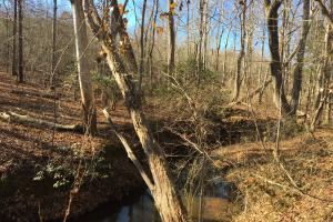 Country Homesite with Creek in Spartanburg, SC (9 of 24)