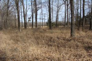 <p>Deer stand adjacent to timber and food plot</p>