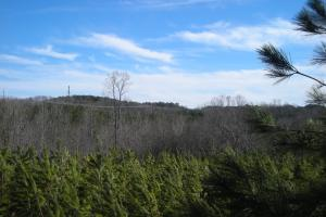 Hwy 120 Recreational, Timber, Hunting Tract in Haralson, GA (6 of 17)