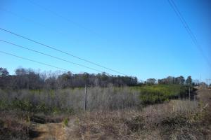 Hwy 120 Recreational, Timber, Hunting Tract in Haralson, GA (10 of 17)