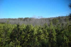Hwy 120 Recreational, Timber, Hunting Tract