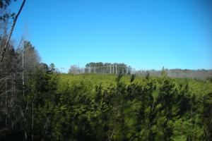 Hwy 120 Recreational, Timber, Hunting Tract in Haralson, GA (7 of 17)