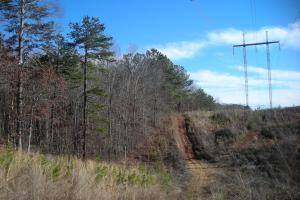 Hwy 120 Recreational, Timber, Hunting Tract in Haralson, GA (12 of 17)