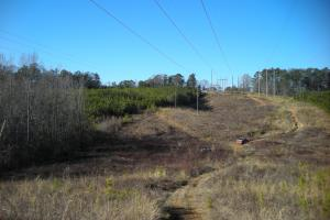 Hwy 120 Recreational, Timber, Hunting Tract in Haralson, GA (8 of 17)