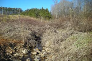Hwy 120 Recreational, Timber, Hunting Tract in Haralson, GA (9 of 17)