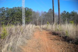 Hwy 120 Recreational, Timber, Hunting Tract in Haralson, GA (13 of 17)