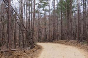 Great price on awesome hunting tract!!! - Holmes County MS