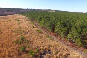 National Forest Longleaf Investment - Chesterfield County SC