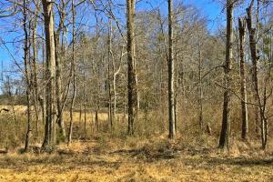 Greenville Farm House, Recreational and Timber Tract in Butler, AL (15 of 31)