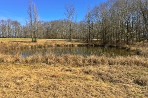 Greenville Farm House, Recreational and Timber Tract in Butler, AL (14 of 31)