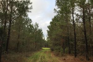 Greenville Farm House, Recreational and Timber Tract in Butler, AL (20 of 31)