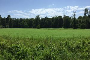 Big Black River Large Acreage Hunting Land - Madison County MS