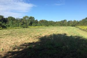 land for sale in al,waterfront land for sale in al (4 of 16)