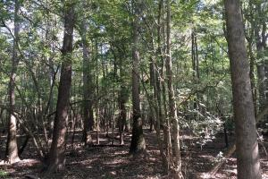 land for sale in al,waterfront land for sale in al (7 of 16)