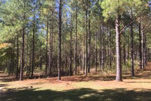 Smallstown Road Homesite