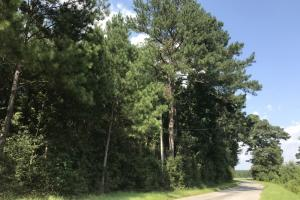 Timber and Residential Potential  North of  Sumrall - Covington County MS