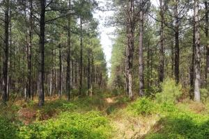 Burgaw 55 Acres - Pender County NC