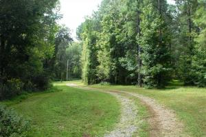 139+/- Acres on Ouachita River with Cabin in Hot Spring, AR (32 of 61)