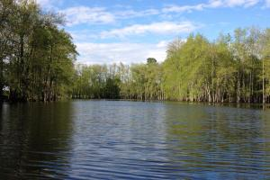 139+/- Acres on Ouachita River with Cabin in Hot Spring, AR (36 of 61)