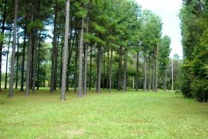 139+/- Acres on Ouachita River with Cabin in Hot Spring, AR (7 of 61)
