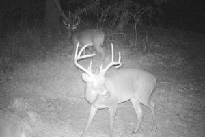 Cullman Trophy Deer Hunting/Timber Investment - Cullman County AL