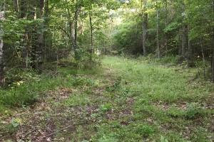 Noxubee River Hunting and Timber - Sumter County AL
