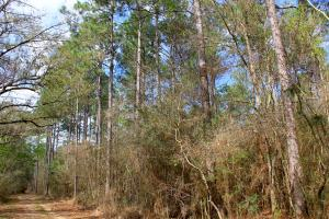The Belforest Corn Branch Tract - Baldwin County AL