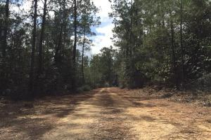 Maytower Road Timber and Hunting Tract  - Baldwin County AL