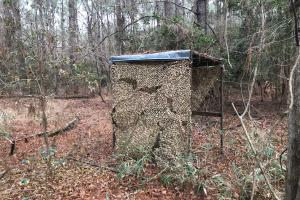 Mercer Mill Hunting Land with Timber in Bladen, NC (19 of 29)