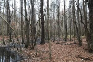 Mercer Mill Hunting Land with Timber in Bladen, NC (5 of 29)