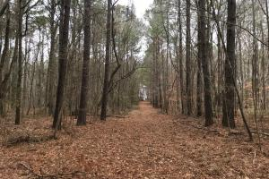 Mercer Mill Hunting Land with Timber - Bladen County NC