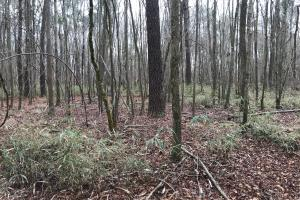 Mercer Mill Hunting Land with Timber in Bladen, NC (11 of 29)