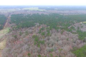 Mercer Mill Hunting Land with Timber in Bladen, NC (13 of 29)